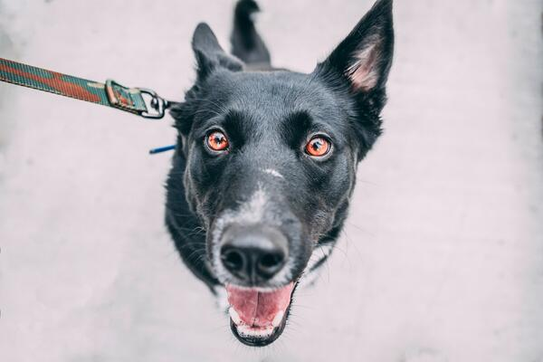Dogs are pure and perfect beings. Photo by Tucker Good via Unsplash.
