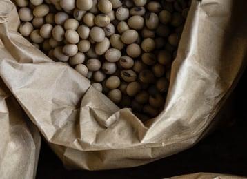 abundance-batch-bean-1537169